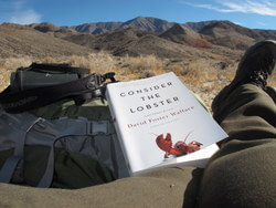 Consider the Lobster book