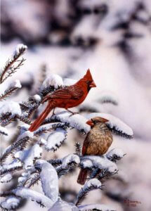 Cardinals of Winter